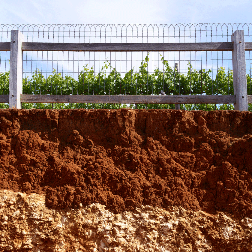 The terra rossa soils of Coonawarra