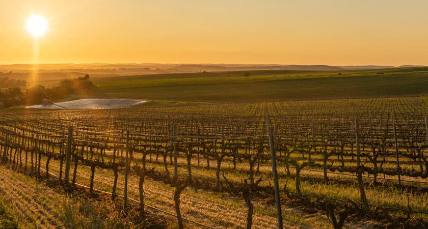 Botanic Vineyard, Clare Valley at sunrise in winter