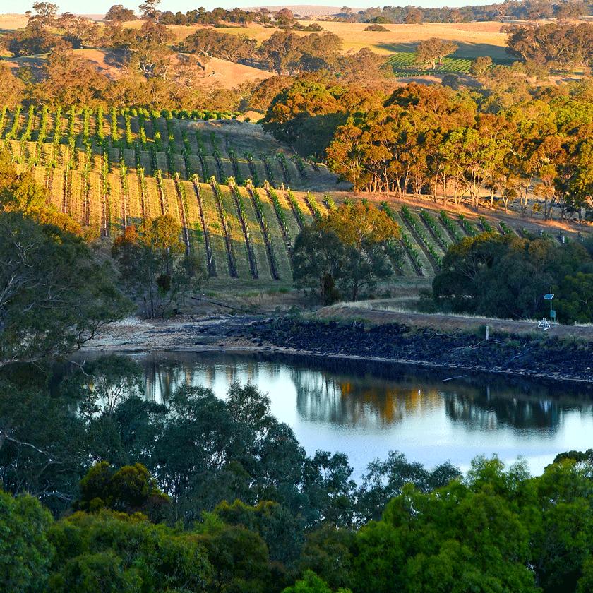 View around Eden Valley vines and dam