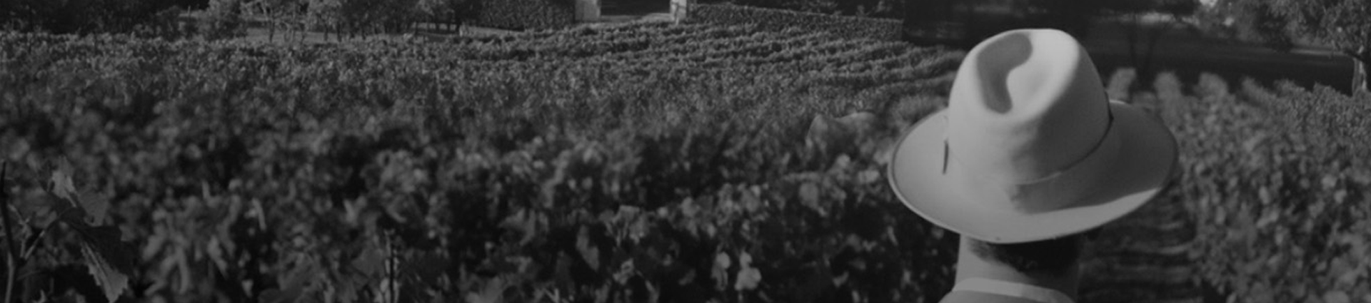 Man stands in vineyard.  Profile view, only the back of his hat is visible