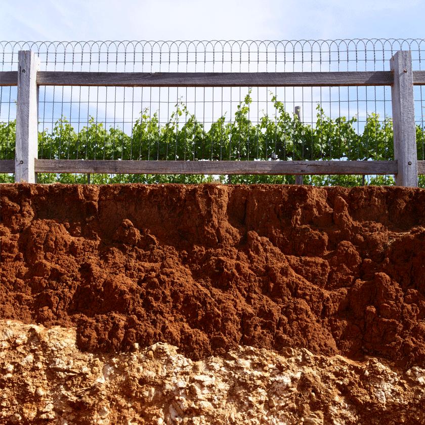 The terra rossa soils of Coonawarra
